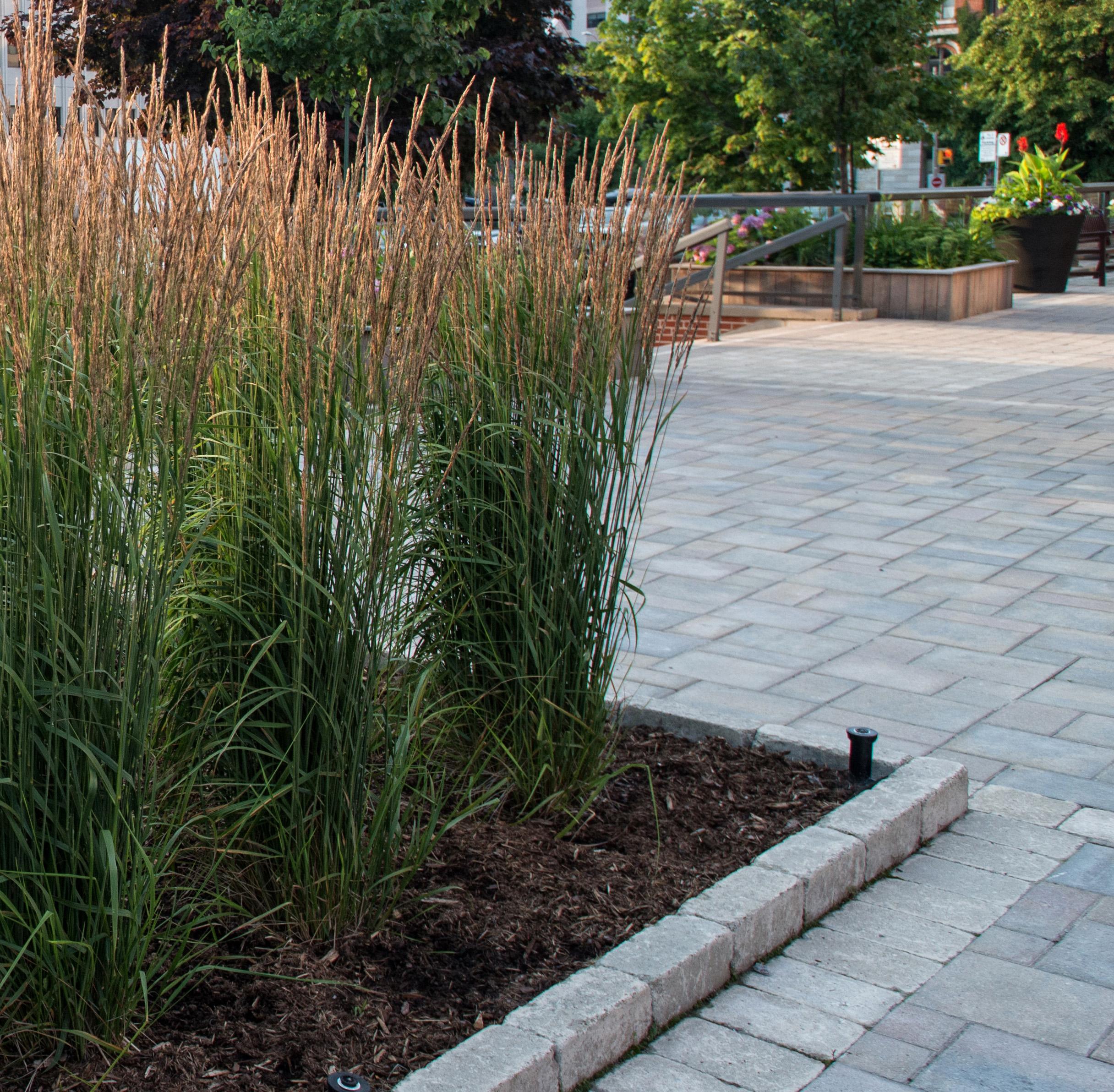Grasses in planter